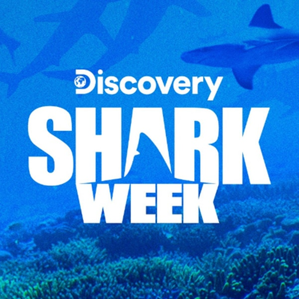 Shark Week 2019 Watch Shark Week Online Without Cable Guide