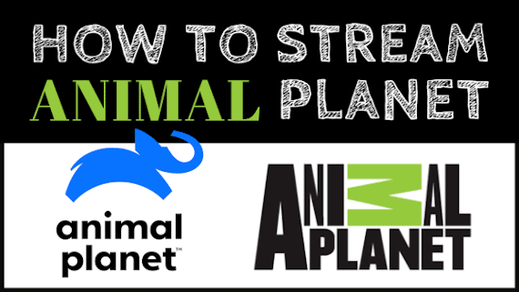 How to Watch Animal Planet Live Online